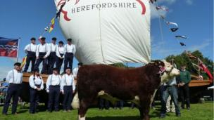 The Trow at the pageant with a bull