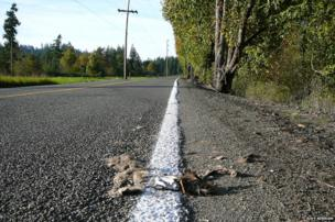 Dead animal in a white line