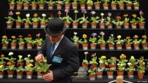 An exhibitor checks plants on display at the Chelsea Flower Show in London (19 May 2014)