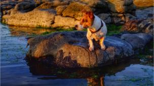 A terrier watching the sunset at Rest Bay, Porthcawl, by Simon Rees of Thomastown in Rhondda Cynon Taf