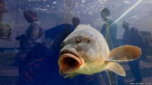 Visitors are reflected in a glass of aquarium with carp