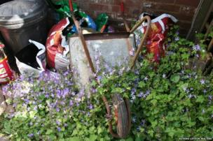 Wheelbarrow and plants