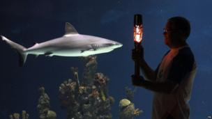 Queen's Baton in The Deep Aquarium, Hull, northern England
