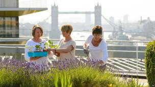 Gardeners work on the rooftop garden at Nomura, in the City of London, overlooking the river Thames and Tower Bridge, which is to be opened to the public for the first time as part of Open Garden Squares weekend, 13 June 2014