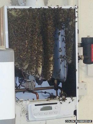 Littleport bees break boiler by building hive inside - BBC News