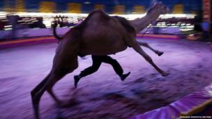 A performer runs with a dromedary during an open training for media at Fuentes Boys Circus in Mexico City