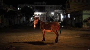 A donkey stands in the middle of a roundabout in Baidoa, Somalia, on 22 June 2014
