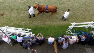 Prize-winning cattle are paraded through the main ring at the Royal Highland Show in Edinburgh