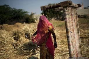 Bishnoi woman works in a field at Guda Bishnoi village near Jodhpur in Rajasthan, India.