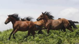 Two horses galloping through fields in Spain