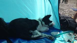 A dog asleep in a tent on the beach