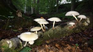 Fungi in woods