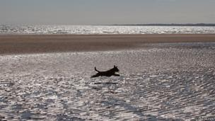 Dog on Tentsmuir