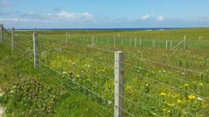 Machair on Benbecula
