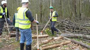 Paratoi'r polion // Preparing the poles for the structure's framework