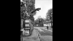 """Leap après la souris"""" (""""Leap after the mouse) 2013"""