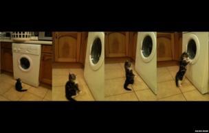 Cat watching a washing machine