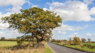 Kett's Oak, Norfolk