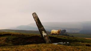 A sheep and standing stone