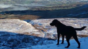 Sioned Edwards' labrador Dotty enjoys the view from a disused quarry on the Black Mountain, near Brynaman.