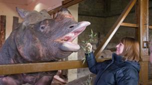 Feeding a rhino
