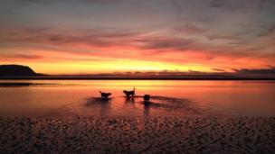 Dogs on Llandudno beach at sunset