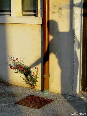 Shadow and plant