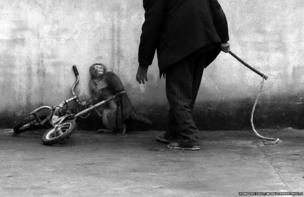 A monkey cowers as its trainer Qi Defang approaches during training for a circus in Suzhou, Anhui province, China.