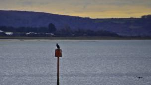 A cormorant photographed from the Millennium Coast Path in Llanelli by Colin Riddle from Haverfordwest