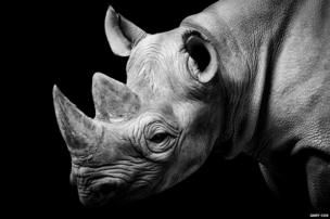 Rhino house in Chester Zoo