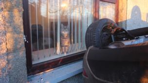 Cat beside crashed car