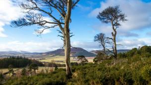 Craigfall trail