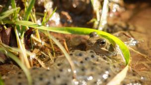 Andrew McLean of Cardiff took this shot of a frog in a puddle during a family walk in the Forest of Dean
