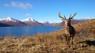 Stag by loch