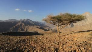 Solitary tree between Fujairah and Oman