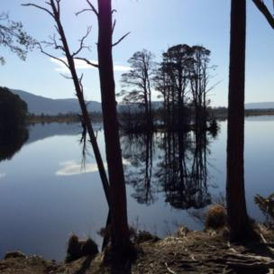 Loch Mallachie, in the Cairngorms, taken by Loreen Smith while on holiday there.