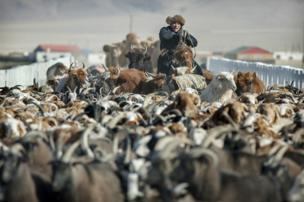 Herder Shohan's animals travel though a village before heading into open country - copyright Timothy Allen