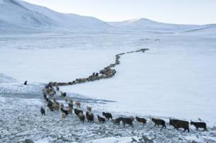 Herding animals across a frozen lake in the Altai Mountains in Mongolia - copyright Timothy Allen