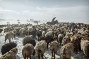 Herding animals through the snowy Altai Mountains in Mongolia - copyright Timothy Allen
