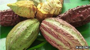 Cocoa fruit (Image: Michael Kleine)