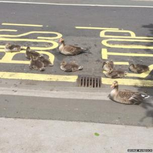 Ducks at a bus stop in New York