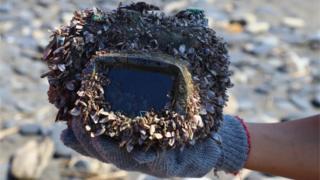 Una cámara recubierta de crustáceos