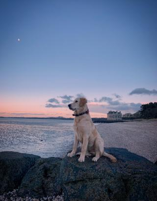 Dog on beach at Barnbougle Castle, South Queensferry.