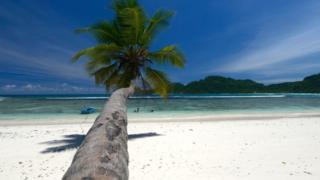 Palmera en una playa en las Seychelles.