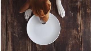 كلب يأكل من طبق