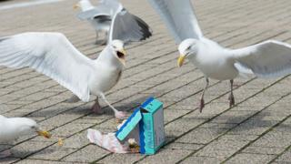 Seagulls fighting over a box of fish and chips