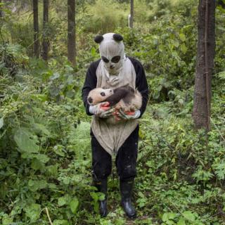 打扮成熊猫的熊猫繁殖中心研究员