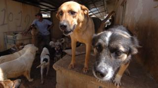 Dogs at rescue home in Beirut