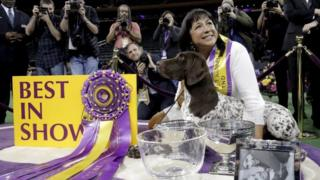 Handler Valerie Nunez Atkinson poses with CJ, a German Shorthaired Pointer from the Sporting Group, after they won Best in Show at the Westminster Kennel Club Dog show at Madison Square Garden in New York on 16 February 2016.
