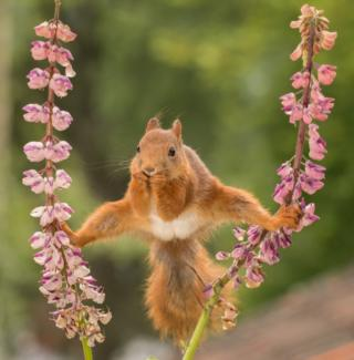 Squirrel holding on to plants with its feet
